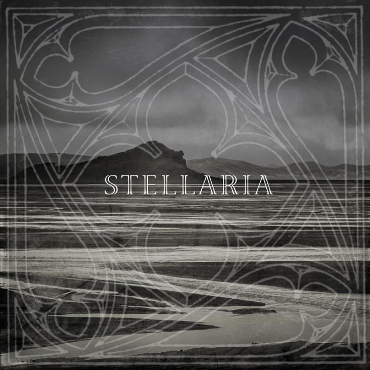 Stellaria_732_732